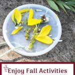 Enjoy Fall Activities at the Park searching for Nature Treasures