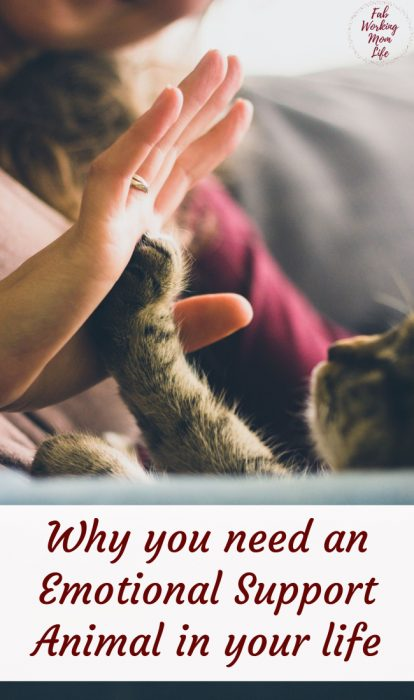 Why you need an emotional support animal in your life   Fab Working Mom Life #animals #pets #mentalhealth #emotionalsupport #health